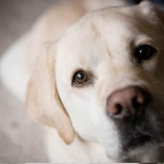 Pet Friendly Apartments Bluffton _lab
