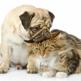 Pet Friendly Apartments Bluffton dog_and_cat